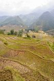 Rice fields on terraced of  Cat Cat Village,Vietnam. Stock Photography