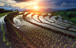 Rice fields on terraced at Chiang Mai, Thailand Royalty Free Stock Images