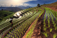 Rice fields on terraced at Chiang Mai, Thailand. Rice fields on terraced with a beautiful sunset at Chiang Mai, Thailand Stock Photography