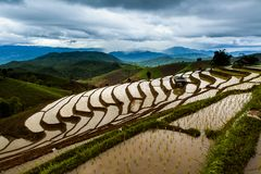 Rice fields on terraced at Chiang Mai, Thailand. stock photo