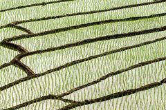 Rice fields on terraced at Chiang Mai, Thailand. stock photography
