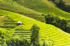 Rice fields on terraced of Mae Chaem, Ching Mai, Northern Thaila Stock Photography