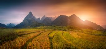 Rice fields on terraced with Mount Fansipan background at sunset. In Lao Cai, Northern Vietnam. Fansipan is a mountain in Vietnam, the highest in Indochina stock images