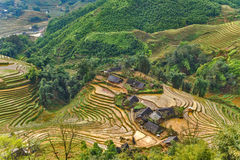 Rice fields on terraced mountain farm landscapes. Stock Image