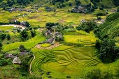 Rice fields on terraced Stock Photos