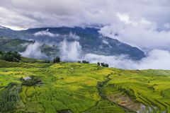 Rice fields on terraced Royalty Free Stock Photo