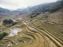 Rice fields on terraced mountain farm landscapes Lao Cai province, Sapa Viet Nam, Northwest Vietnam. Natural travel background royalty free stock images