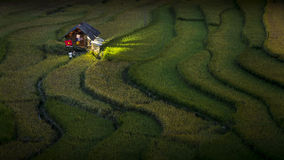 Rice fields on terraced of Mu Cang Chai Royalty Free Stock Photography