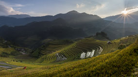 Rice fields on terraced of Mu Cang Chai Stock Photography