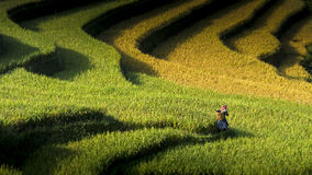 Rice fields on terraced of Mu Cang Chai Stock Photo