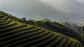 Rice fields on terraced of Mu Cang Chai Stock Images