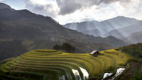 Rice fields on terraced of Mu Cang Chai Royalty Free Stock Images