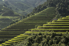 Rice fields on terraced of Mu Cang Chai, Vietnam. stock images
