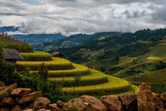 Rice fields on terraced of Mu Cang Chai, YenBai. royalty free stock photography