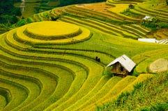 Rice fields on terraced of Mu Cang Chai, YenBai, Vietnam. Stock Photos