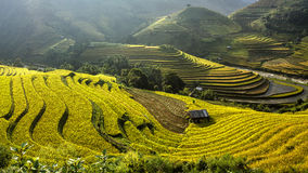 Rice fields on terraced of Mu Cang Chai, YenBai, Vietnam. royalty free stock photos