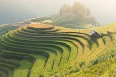 Rice fields on terraced of Mu Cang Chai, YenBai, Vietnam. Rice f. Ields prepare the harvest at Northwest Vietnam.Vietnam landscapes royalty free stock photo
