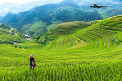 Rice fields on terraced of Mu Cang Chai, YenBai Royalty Free Stock Photo