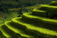 Rice fields on terraced of Mu Cang Chai, YenBai, Vietnam, Vietnam landscapes stock images