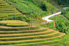 Rice fields on terraced in rainny season at Mu Cang Chai, Yen Ba Stock Image