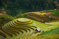 Rice fields on terraced in rainny season at Mu Cang Chai, Yen Bai, Vietnam. Royalty Free Stock Photography