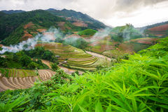 Rice fields on terraced in rainny season at Mu Cang Chai, Yen Bai, Vietnam. Stock Image