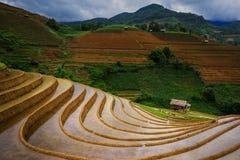 Rice fields on terraced in rainny season at Mu Cang Chai, Yen Bai, Vietnam. Royalty Free Stock Images