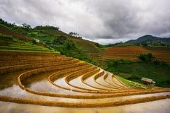 Rice fields on terraced in rainny season at Mu Cang Chai, Yen Bai, Vietnam. Stock Photo