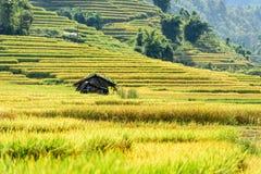 Rice fields on terraced in rainny season at SAPA, Lao Cai, Vietn Stock Photography