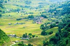 Rice fields on terraced in rainny season at SAPA, Lao Cai, Vietn Royalty Free Stock Image