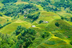 Rice fields on terraced in rainny season at SAPA, Lao Cai, Vietn Royalty Free Stock Photo