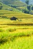 Rice fields on terraced in rainny season at SAPA, Lao Cai, Vietn Stock Image