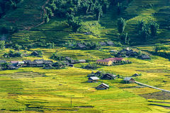 Rice fields on terraced in rainny season at SAPA, Lao Cai, Vietn Stock Images