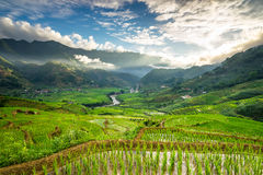 Rice fields on terraced in rainny season at SAPA, Lao Cai, Vietnam. Rice fields prepare for transplant at Northwest Vietnam Royalty Free Stock Photos