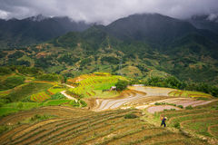 Rice fields on terraced in rainny season at SAPA, Lao Cai, Vietnam. Stock Photography