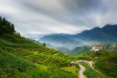 Rice fields on terraced in rainny season at SAPA, Lao Cai, Vietnam. Royalty Free Stock Image
