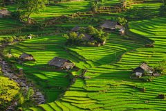 Rice fields on terraced in rainny season at SAPA, Lao Cai, Vietnam. Royalty Free Stock Photography