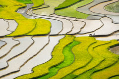 Rice fields on terraced in rainny seasont at TU LE Village, Yen Bai, Vietnam. Rice fields prepare for transplant at Northwest Vietnam Stock Photo