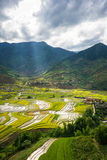 Rice fields on terraced in rainny seasont at TU LE Village, Yen Bai, Vietnam Royalty Free Stock Photography