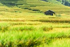 Rice fields on terraced in rainy season at SAPA, Lao Cai, Vietna Stock Photo