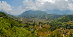 Rice fields on terraced Royalty Free Stock Images