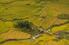 Rice fields on terraced of SAPA, Vietnam. Rice fields prepare the harvest at Northwest Vietnam. Royalty Free Stock Photo