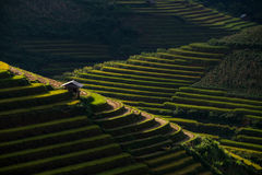 Rice fields on terraced in sunset at Mu Cang Chai, Yen Bai, Vietnam. Royalty Free Stock Photography