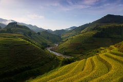 Rice fields on terraced in sunset at Mu Cang Chai, Yen Bai, Vietnam Stock Photos