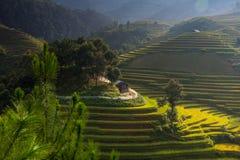 Rice fields on terraced in sunset at Mu Cang Chai, Yen Bai, Vietnam. Stock Photo