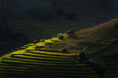 Rice fields on terraced in sunset at Mu Cang Chai, Yen Bai, Vietnam. Stock Photo
