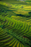 Rice fields on terraced in sunset at Mu Cang Chai, Yen Bai, Vietnam. Royalty Free Stock Image