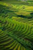 Rice fields on terraced in sunset at Mu Cang Chai, Yen Bai, Vietnam. Rice fields prepare the harvest at Northwest Vietnam royalty free stock image