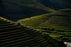Rice fields on terraced in sunset at Mu Cang Chai, Yen Bai, Vietnam. Stock Photos