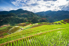 Rice fields on terraced in sunset at Mu Cang Chai, Yen Bai, Vietnam. Royalty Free Stock Photos